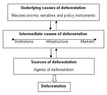 short essay on causes of deforestation Global observations have provided clear evidence of professional homework writers service usa climatic changes resulting from short essay deforestation as a.