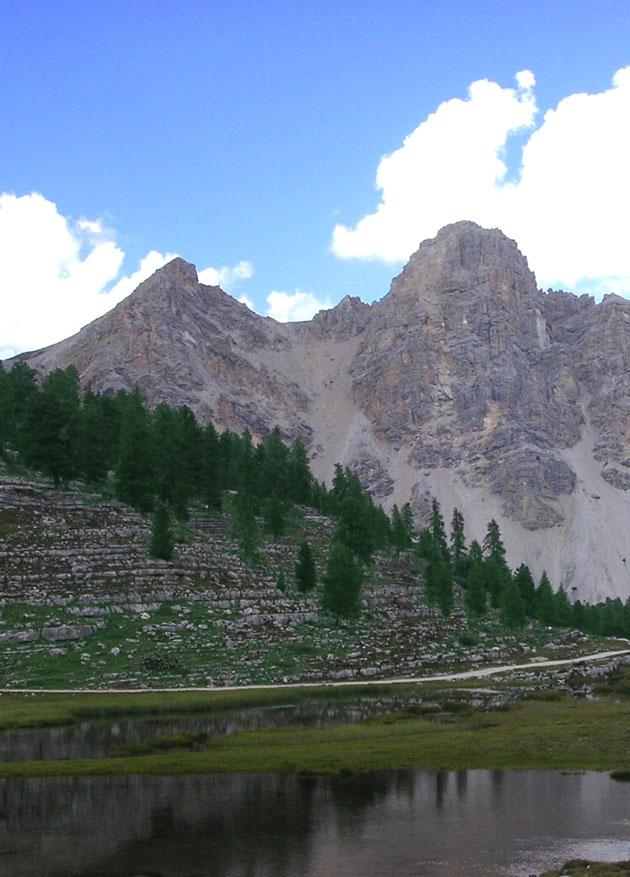 Abeti rossi al limite superiore del bosco, Gruppo Fanes (BZ). Foto: G. Bucci